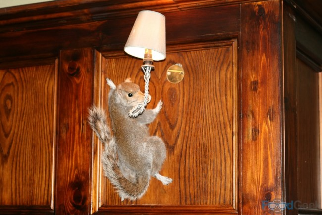 Squirrel Light